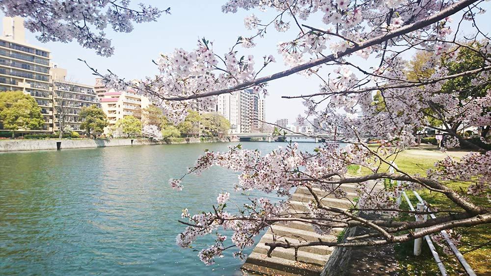 やっぱり日本人です☆桜きれいですね