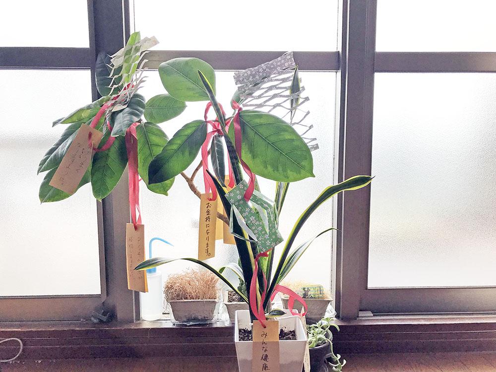 七夕の飾りをつけた観葉植物*ルンバは気に入らなかったのか?